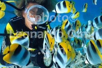 French Polynesia, Rangiroa island, saddleback butterflyfishes, diver (11-2) JPG2 copy