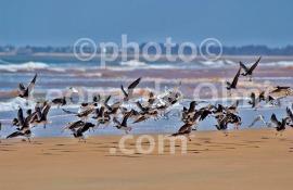 Africa, Kenya, birds DSC_4627 bis copy