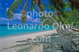 British Virgin Islands, White Bay, beach, palm threes (72-3) JPG copy