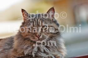 Italy, cat DSC_1289 JPG copy