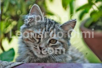 Italy, cat DSC_7562 JPG copy