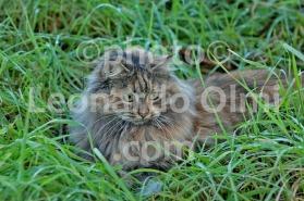 Italy, cat DSC_7965 JPG copy