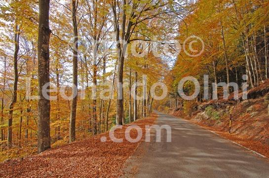 Italy, Tuscany, Amiata, threes along the road DSC_4876 copy