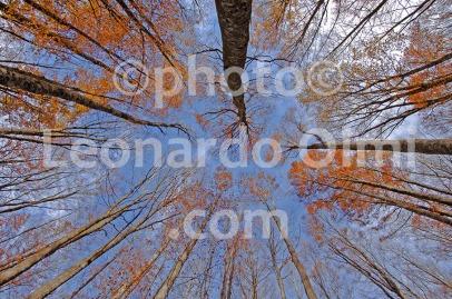 Italy, Tuscany, Amiata, threes DSC_4806 copy