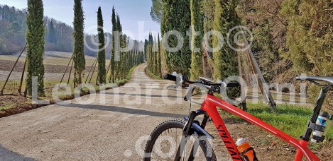 Italy, Tuscany, Florence, Chianti, cypress, bicycle 20180228_111956 bis copy