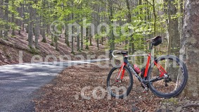 Italy, Tuscany, Florence, Vallombrosa, woods, road, bicycle 20170412_124641 bis copy