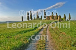 Italy, Tuscany, Pienza, Val d'Orcia, cypress, house DSC_7567 bis copy