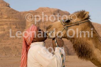 Jordan, Wadi Rum desert, bedouin with camel DSC_8501 JPG copy