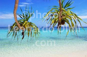 Malysian Borneo, Lankayan island, lagoon and pal trees DSC_9337 bis copy