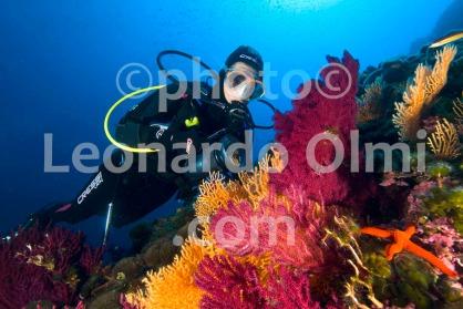 Croatia, Vis island_underwater, gorgonia seafans, diver DSC_9157 TIF copia copy