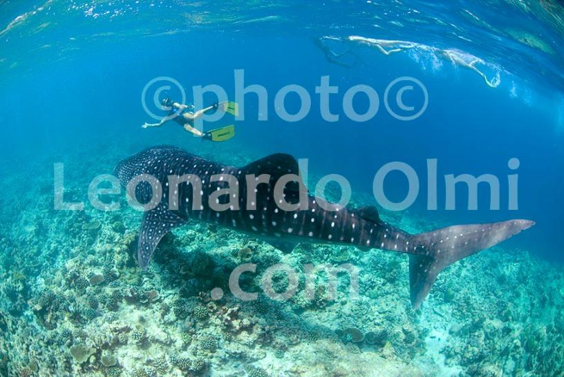 Maldives DSC_3780 TIF copia copy