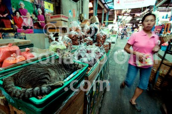 Thailand, Bangkok, fruit market, cat DSC_4282 TIF copia copy