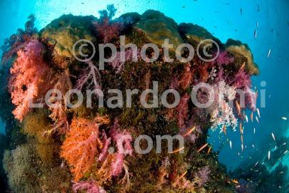 Thailand, Similan islands, soft corals DSC_1662 TIF copia copy