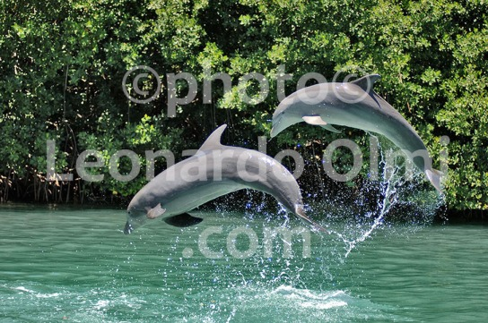 British Virgin Islands_Tortola_Dolphins_Dolphinarium_DSC_0977 bis JPG copy