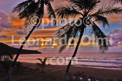 British Virgin Islands_Tortola_Lambert Beach_sunset_palm trees_DSC_0827 bis JPG copy